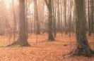 Ciemny Grąd jesienią_1