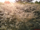 Łąki na wysokim brzegu Zyzogi_1