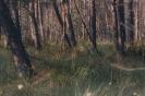 Torfowisko leśne_1