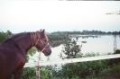 powódż 2001
