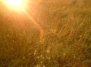 Łąka w słońcu_1