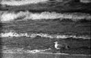 Mewa i morze_1