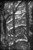 Śnieg na drzewach_1