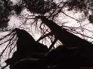 Spod drzewa_1