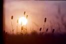 Zachód słońca_1