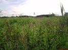 łąka zdegradowana biologicznie_1