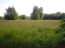 Podmokła łąka w Starym Narcie_1