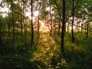 Gloria w lesie_1
