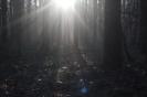 Gloria w morcznym lesie_1