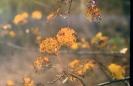 Jesień na osikach_1