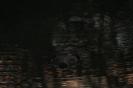 bober w nocy_1